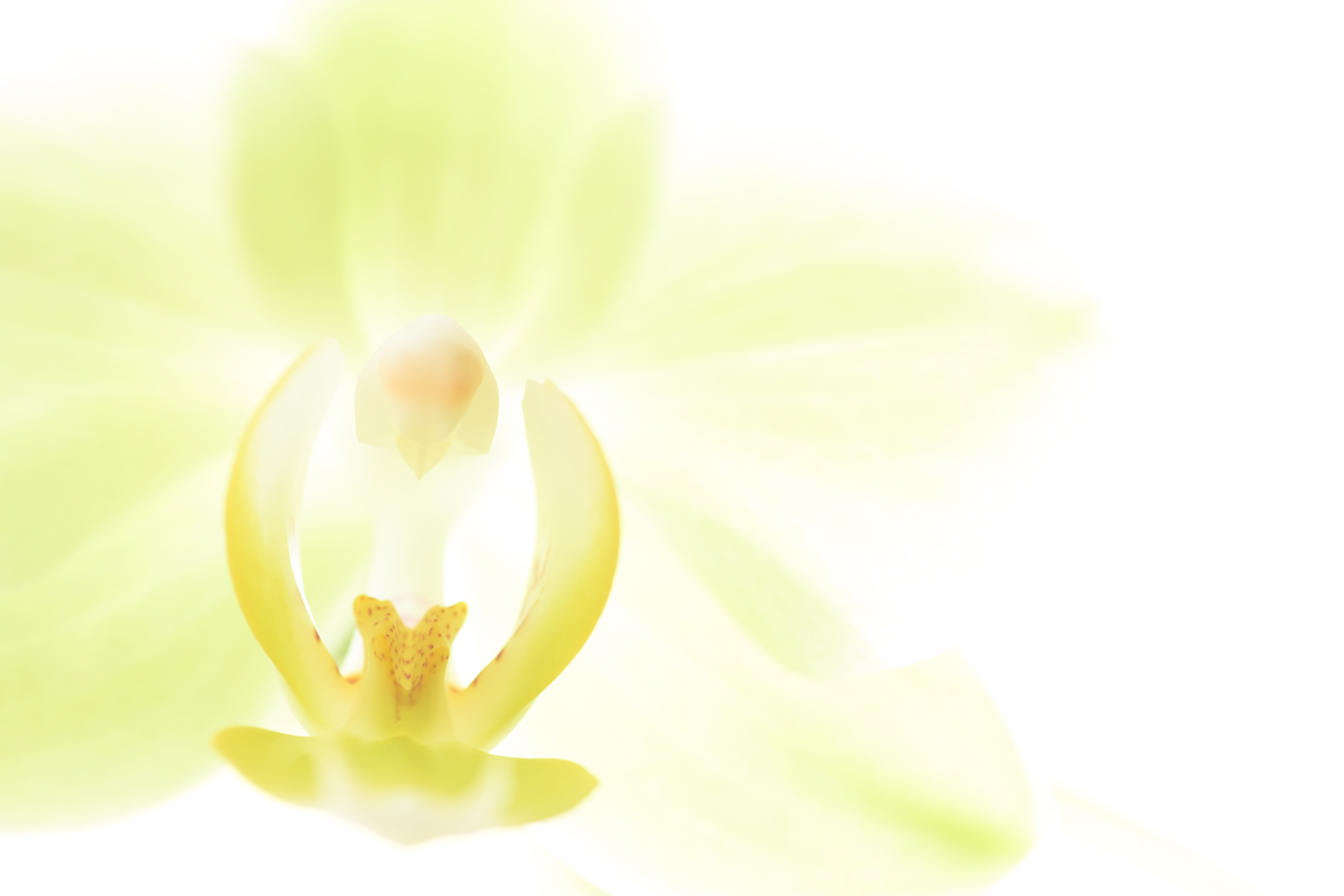 Orchid_Study